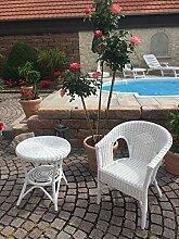 Rattan Set Sessel NEU in der Farbe weiß + Tisch 50 cm