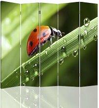 Raumteiler Ladybug mit 5 Paneelen
