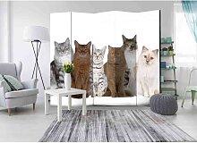 Raumteiler Paravent für Tierarztpraxis Katzen