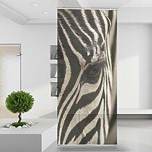 Raumteiler Zebra Augenblick Afrika Tier Wild Wand