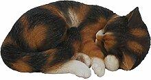 Real Life Katze, Schlafend in Havanna