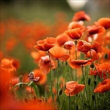 Rechteckiges Glasbild Orange Poppies I, Fotodruck