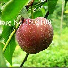 Red 2: Neue 5 PC Bonsai Plum Obstbaum Pflanze,