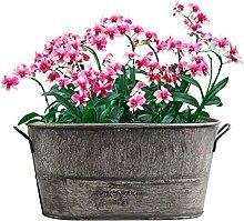 Retro Persönlichkeitsanlage Blumentopf Sukkulente