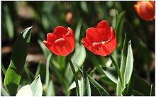 RFGED Rote Tulpe Blume 1 Stück Zeitgenössische