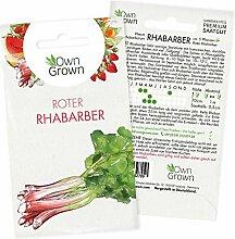 Rhabarber Pflanzen Samen: Premium Roter Rhabarber