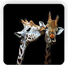 Rikki Knight küssende Giraffen Design Quadratisch