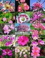 Rosa Blumen-Pflanzen-Mix Exotische Garten-Baum