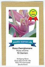 Rosa Zwergbanane (pink velvit-Banane) - Musa