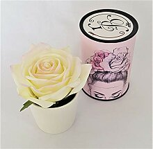 Rose de Boheme 801291 Künstliche Duftrose, Natur,