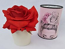 Rose de Boheme 801294 Künstliche Duftrose, Natur,