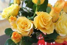 Rose Gelber Duft - Kräftige Pflanze im 6lt Container