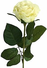 Rose Marissa creme 9 Stück