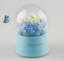 Rose Music Box/Importiert Live Blume