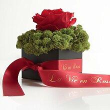 Rosemarie Schulz konservierte Blumen und Rosen,