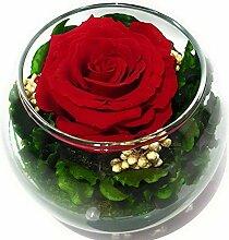 Rosen-Te-Amo Konservierte ewige rote Rose in der