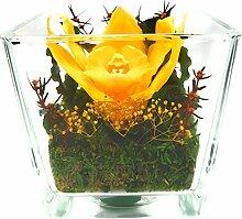 Rosen-te-amo Konservierte-Orchide–