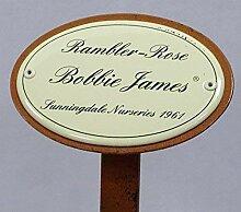 Rosenschild Emaille Rambler Rose Bobbie James,