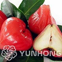 Rot: Neue 50Pcs Bonsai Wachs Apfel Obst Bonsai