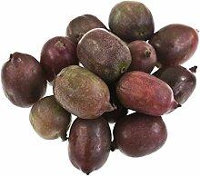 Rote Mini Kiwi Zwergkiwi - Actinidia arguta