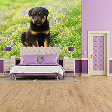 Rottweiler Welpenhund Wandbild Nettes Tier Foto-Tapete Kinderzimmer Wohnkultur Erhältlich in 8 Größen Riesig Digital
