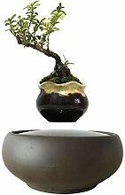 Royala Magnetschwebebahnpflanze Schwimmende Luft