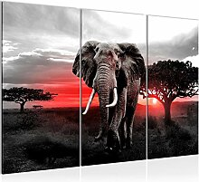 Runa Art Afrika Elefant Bild Wandbilder Wohnzimmer