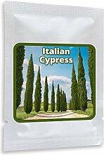 Säulenzypresse 100 Samen - Mittelmeer Zypresse -