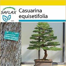 SAFLAX - Anzucht Set - Bonsai - Australische