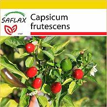 SAFLAX - Anzucht Set - Chili - Chillipepper Red