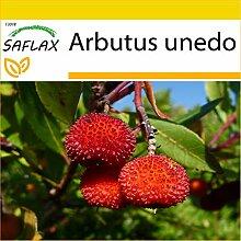 SAFLAX - Anzucht Set - Erdbeerbaum - 50 Samen -