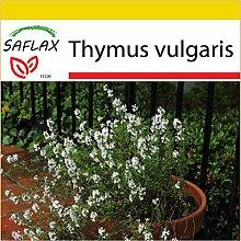 Echter Thymian Heilpflanze 2500 Samen Thymus Vulgaris  Gewürz