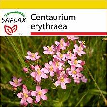 SAFLAX - Anzucht Set - Heilpflanzen -