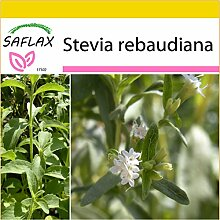SAFLAX - Anzucht Set - Kräuter - Stevia