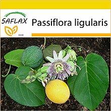 SAFLAX - Anzucht Set - Süße Granadilla - 20