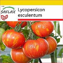 SAFLAX - Anzucht Set - Tomate - Tigerella - 10
