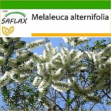 SAFLAX - Australischer Teebaum - 400 Samen - Mit