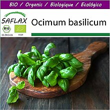 SAFLAX - Big Garden - BIO - Basilikum Sweet