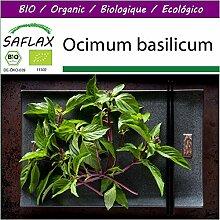 SAFLAX - Big Garden - BIO - Basilikum Thai - 250