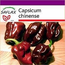 SAFLAX - Big Garden - Chili - Habanero Chocolate -