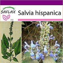 SAFLAX - Big Garden - Kräuter - Mexikanische Chia