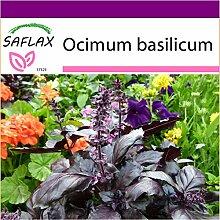 SAFLAX - Big Garden - Kräuter - Rotes Basilikum -