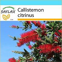 SAFLAX - Geschenk Set - Australischer Lampenputzer