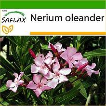 SAFLAX - Oleander - 50 Samen - Mit keimfreiem