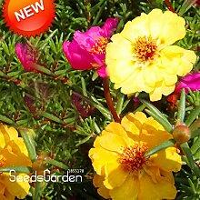 Sale! 200 Samen / pack Yellow Plena Portulaca Seed Balkon Garten Topfpflanzen Sonnenblumensamen Portulakröschen, # OH6WWF