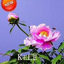 Sale! 25 Farbe wählbar authentische chinesische Pfingstrosen-Blumensamen Topfblumen Bonsai Pflanze Peony Samen 10 Samen / Los, # K8IDQ4