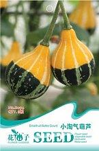 Samen kleine freche Kürbis 8pcs / pack B094 Indoor-Bonsai Blume Pflanze