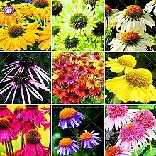 Samen-Paket: 50pcs / Bag Echinacea purpurea 9 Art