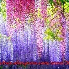 Samen Von Garten Flowers10 Samen/Pack Heißer