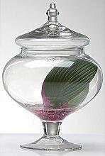 Sandra Rich 360536 Glasdose, Glas, transparent, 20
